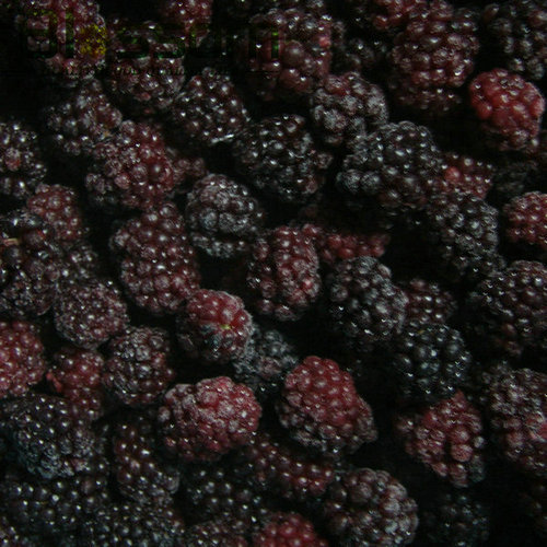Frozen Fruit Chinese Exporter Iqf Blackberry