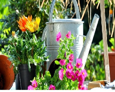 Garden Accessories Such As Watering Cans Bird Bath Feeders And Many More