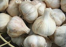 Garlic Allium Sativum