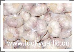 Garlic Fresh Normal White Pure Red