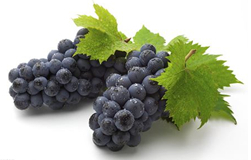 Grape Seed Extract Proanthocyanidin Polyphenol