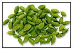 Green Caromom Spices Agriculture