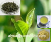 Green Tea Extract Egcg Catechins Polyphenols