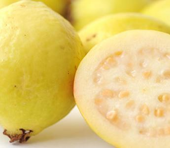 Guava Export Season Whole Year Except May And June