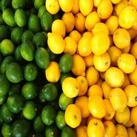Lemon Varieties Verna Lime Banzaher