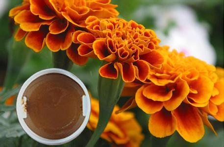 Marigold Oleoresin For Lutein Zeaxanthin Healthcare Business