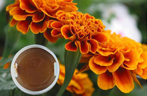 Marigold Oleoresin For Plant Extract