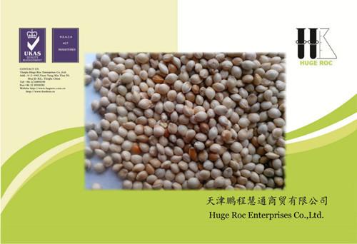 Millet For Human Food Feed Bird