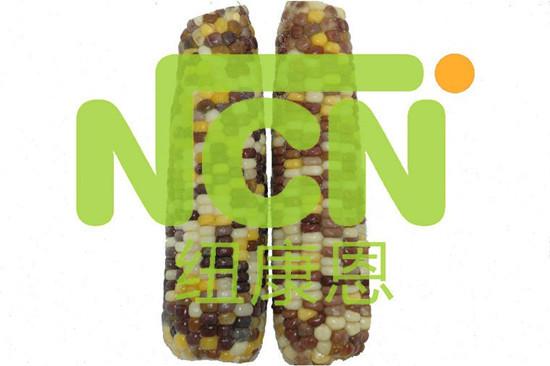 Mottled Frozen Maizze Corn