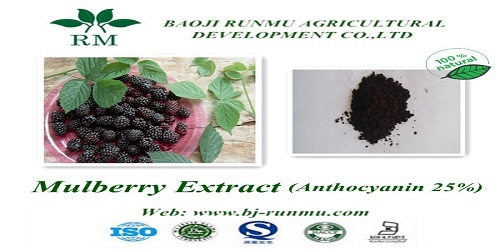 Mulberry Extract Anthocyanidins 25