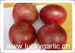 Onion Fresh Yelow Red Peeled
