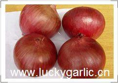 Onion Fresh Yelow Red Yellow