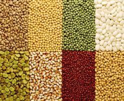 Organic Pulses Such As Chickpeas Kala Chana Masoor Dal Moong Moth Bean