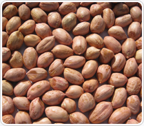 Peanut Groundnut Kernel