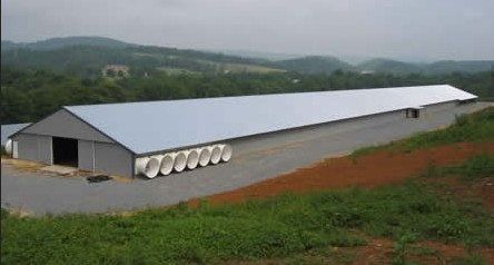 Prefabricated Chicken House Pig Shed Poultry