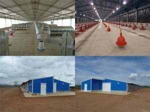 Prefabricated Chicken House Poultry
