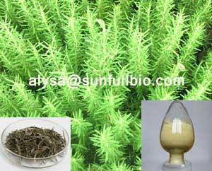 Rosemary Extract Carnosic Acid Rosmarinic Ursolic