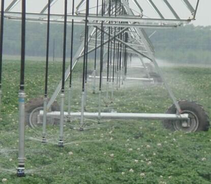 Sand Farmland Potatoes Irrigation System Corn Land Center Pivot