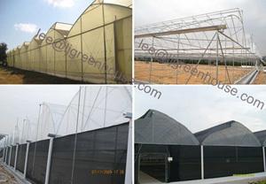 Sawtooth Greenhouse 800 960