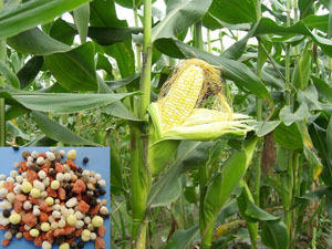 Sell N P K Compound Fertilizer Complex Npk Mixed Engrais Organic