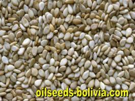 Sesame Seeds Bulk Sale