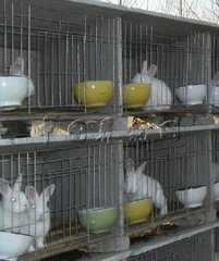Steel Wire Mesh Enclosure For Rabbit Offers You High Quality Products