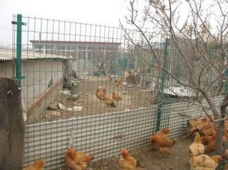 Steel Wire Mesh Fence For Chicken House Offers You High Quality Products