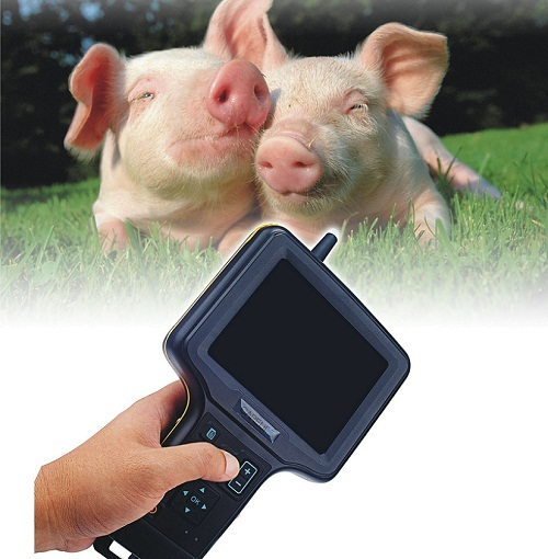 Swine Ultrasound So Scan