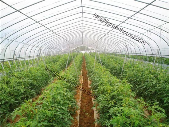 Tomato Fabricated Steel Greenhouse For Growing