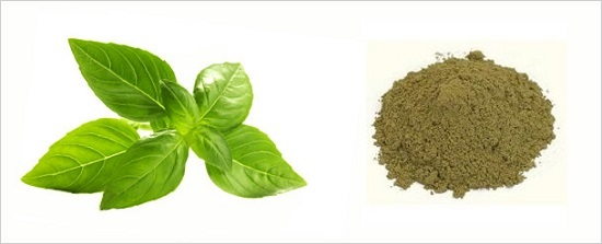 Tulsi Powder Basil Leaves Ocimum Sanctum
