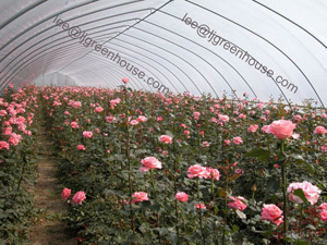 Tunnel Greenhouse For Growing Vegetable And Flower