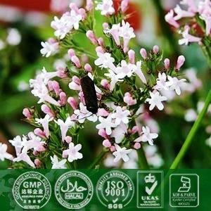 Valerian Root Extract 0 4 8