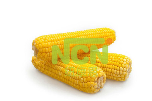 Yellow Iqf Fresh Corn Cob